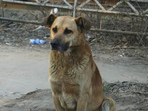 Неизвестные выпустили около 300 собак из рязанского питомника, две собаки погибли