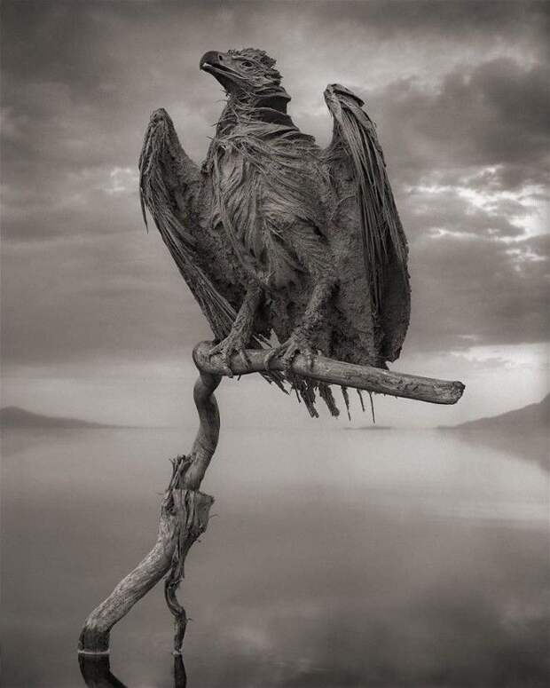 S7 фото смертельного озера Натрон которое превращает птиц в статуи