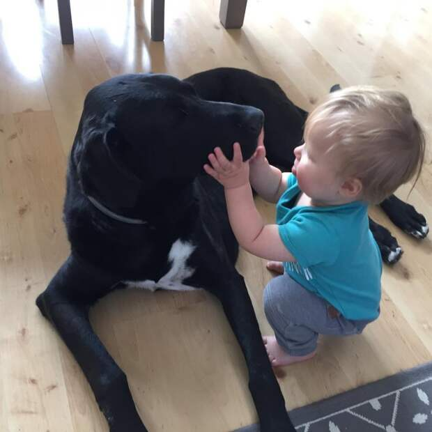 13. Это любовь животные, животные и дети, кошки, питомцы, собаки, фото
