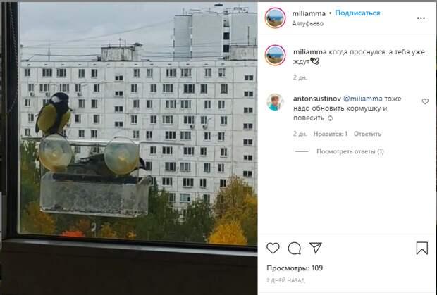 Фото дня: голодные синицы разбудили жительницу Алтуфьева