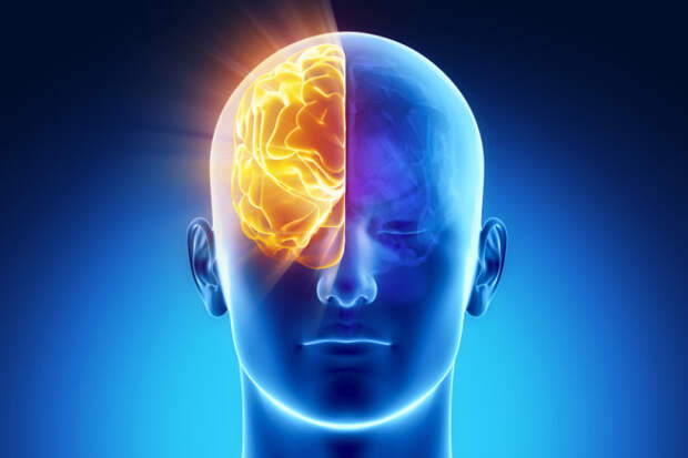 Учёные выяснили, что человек хранит воспоминания в обоих полушариях мозга