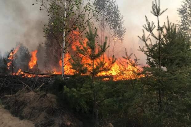 В Костромской области неделю не могут потушить лесной пожар