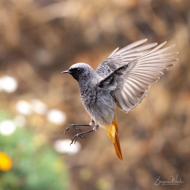 Птицы и животные на снимках Бенджамина Венде