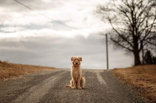 Лост. Пес, привязанный к отбойнику