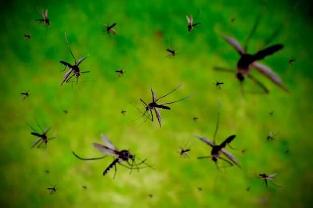 На Камчатке заметили комариный «смерч» (видео)
