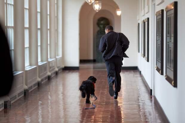 Обама показывает своему псу Бо Белый дом.