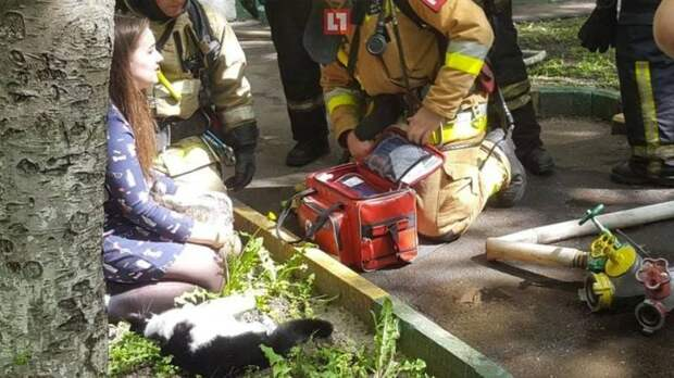 В Москве при пожаре в квартире сотрудники МЧС спасли двух кошек и двух собак