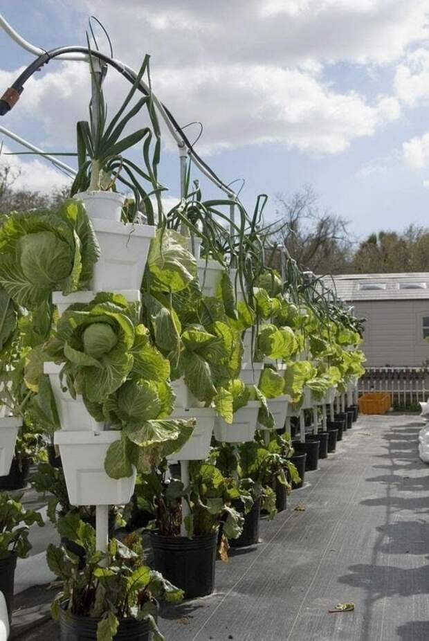 Ценные огородные идеи для высокого урожая и экономии сил