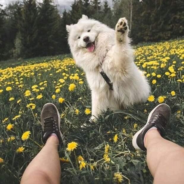 Животные, которые знают, как эффектно себя подать