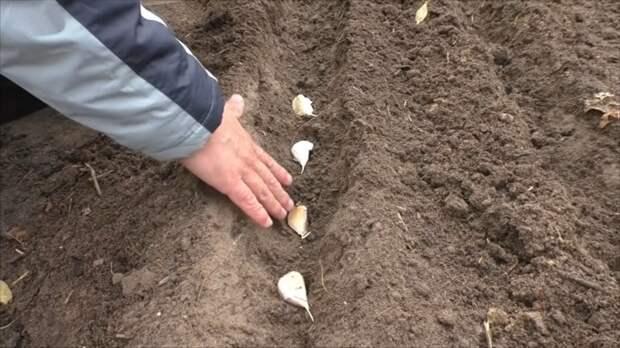 Отличный способ посадки чеснока