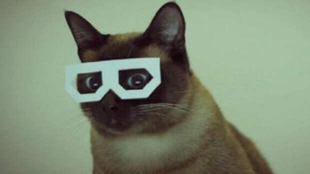 В Великобритании состоится фестиваль интернет-котов