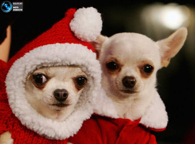 Забавные и симпатичные собаки