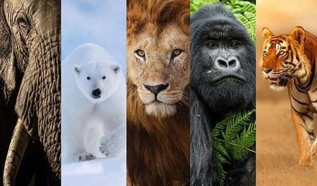 Большая пятерка: масштабный опрос выявил пять самых фотогеничных диких животных мира