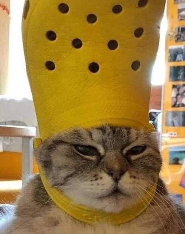 Животные и крайне странные ситуации с ними: 12 смешных фото