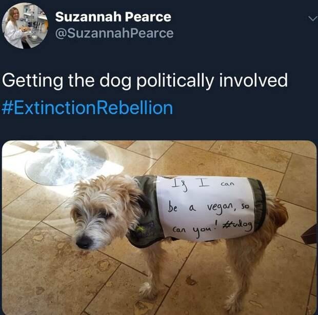 Экоактивистка похвасталась псом-веганом ивызвала бурю возмущения всети