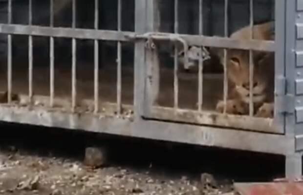 Вместо заботы: страшные истории издевательств над животными в Ростовской области