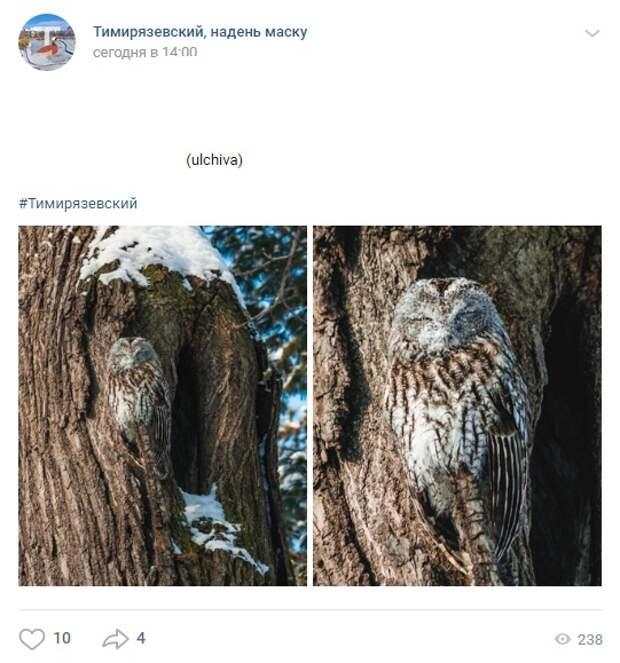 Фото дня: в Тимирязевском заметили сову-хамелеона