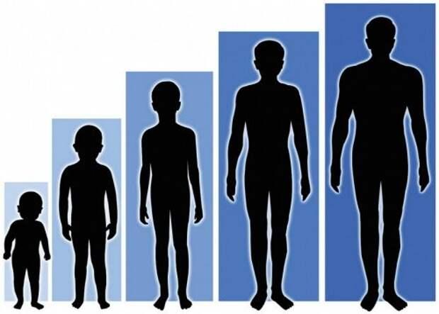 20. Наш рост изменяется каждый день, причём по нескольку раз  тело, человек, шокирующие факты