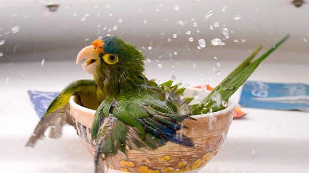 В качества купалки можно использовать любую подходящую ёмкость. Фото: National Geographic