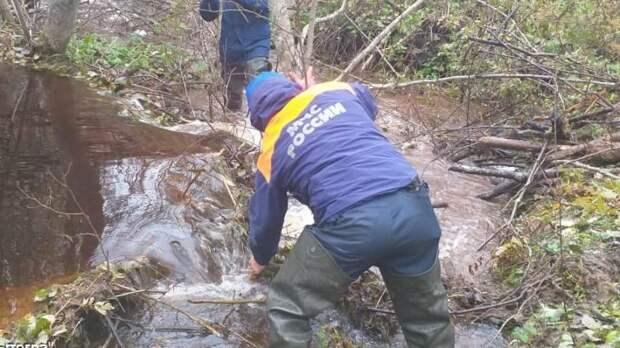 Спасатели больше двух суток ищут пропавшего в омском лесу мужчину