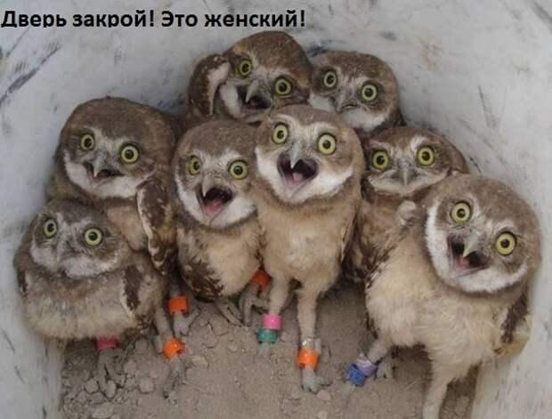 Смешные фото с надписями до слез и веселья (11 фото)