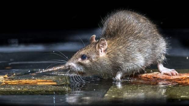 Ученые доказали способность млекопитающих к анальному дыханию