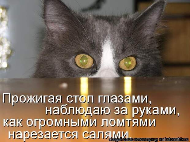 1451737555_kotomatricy-20