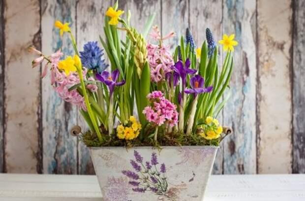 Что посадить рядом с первоцветами, чтобы клумба не пустовала летом