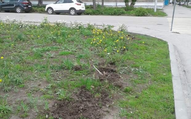 В рязанском сквере высадят 60 кустов спиреи иволистной