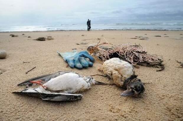 В Краснодарском крае ветеринары не нашли источник гибели птиц, рыб и дельфинов