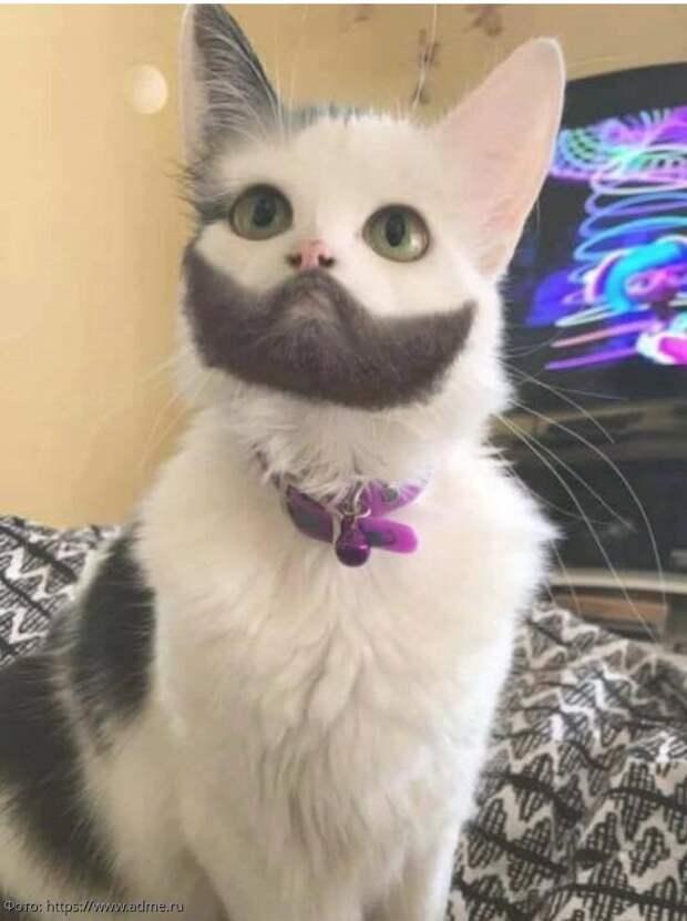 кот с бородой