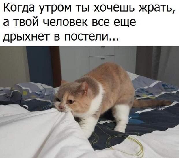 1479315348_fotomemy-12