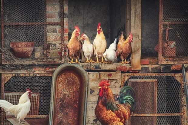 Что известно о птичьем гриппе H10N3, который был впервые выявлен у китайца