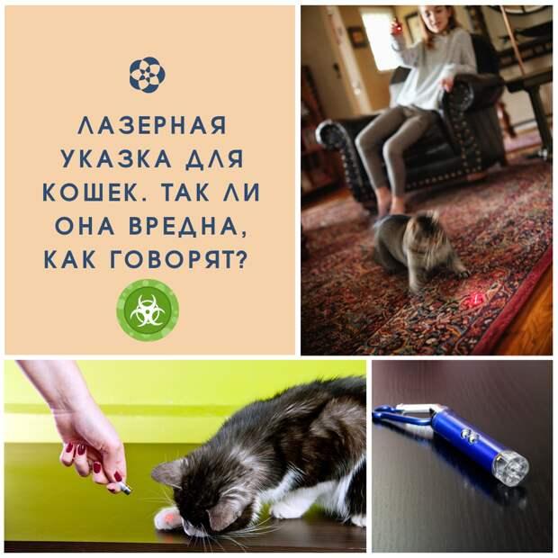 Лазерная указка для кошек. Так ли она вредна, как говорят?