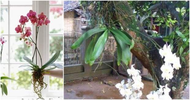 8 удивительных фактов об орхидеях, которые вы скорее всего не знали