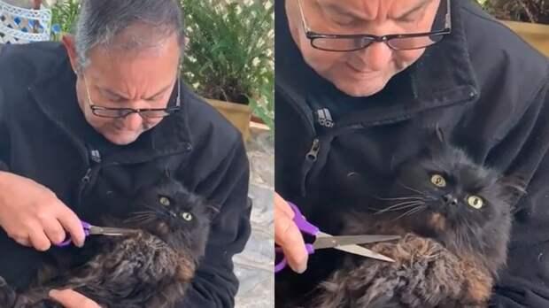 """""""Делай что хочешь"""": смирившийся со своей судьбой кот рассмешил Сеть"""