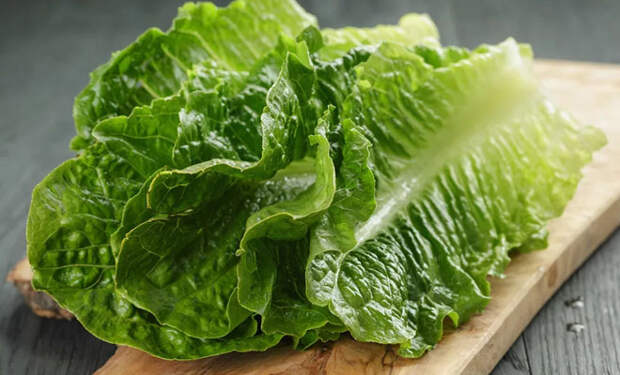 Храним салатную зелень месяц: не сохнет и не чернеет
