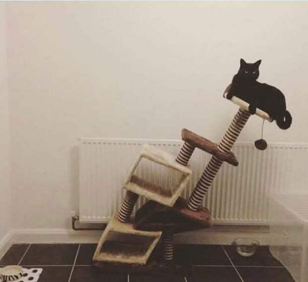 18 котов, которые плевать хотели на законы физики