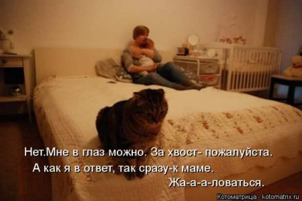 1451492459_kotomatritsa_tb