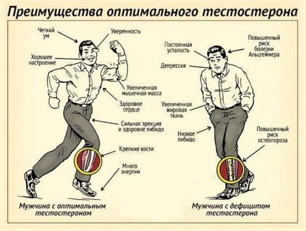 Влияние тестостерона на мужчину