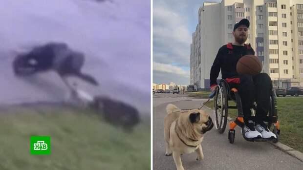 В Ульяновске инвалид-колясочник отбился от стаи бродячих псов и защитил свою собаку