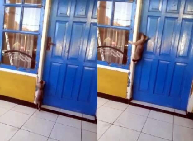 «Бинго»: настырный кот открыл дверь ипопал вдом