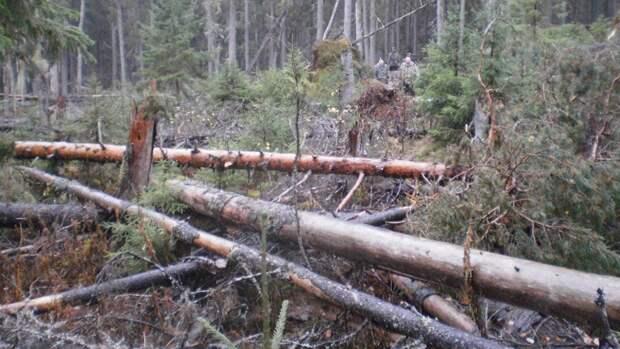 Правоохранители выявили незаконный вывоз леса на 441 млн рублей в Приморье