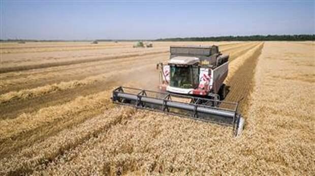 Урожай пшеницы в РФ
