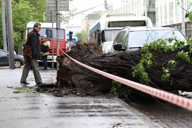 Упавшее из-за непогоды дерево перекрыло дорогу в центре Москвы