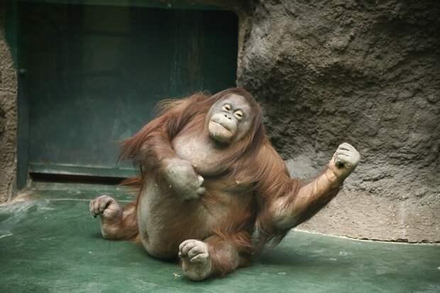 Зоопарк Ижевска перешёл на осенний режим работы