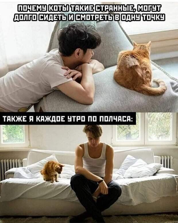 Смешные и познавательные картинки
