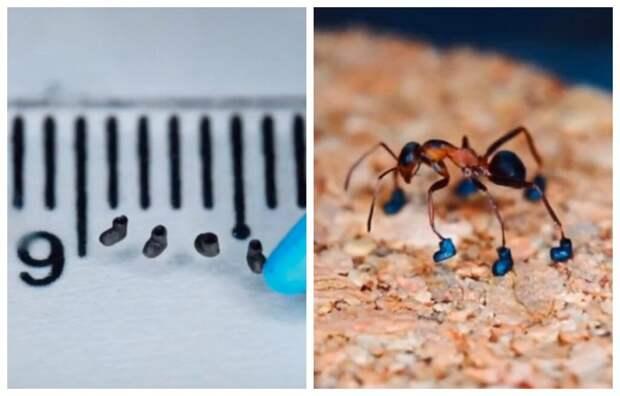 Мастер миниатюры обул муравья