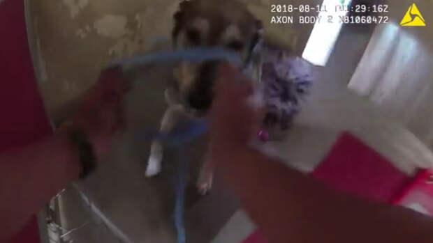 Полицейские очень быстро вытаскивали животных из приюта, чтобы спасти их от сильного пожара