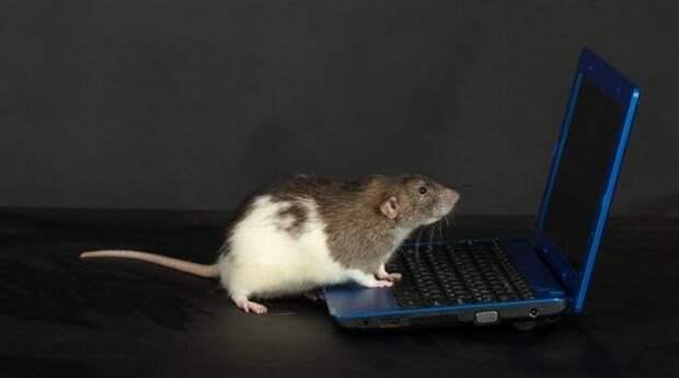 Дистанционное управление животными будущее, в мире, животные, интересное, люди, наука, эксперимент